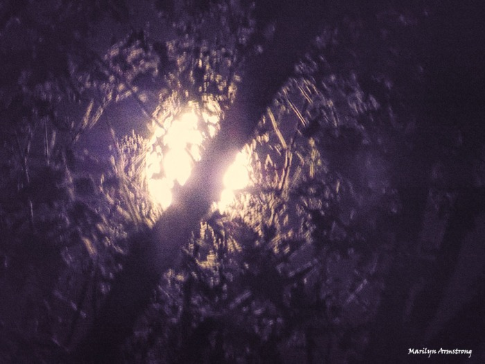 Super moon through the trees - November 13, 2016