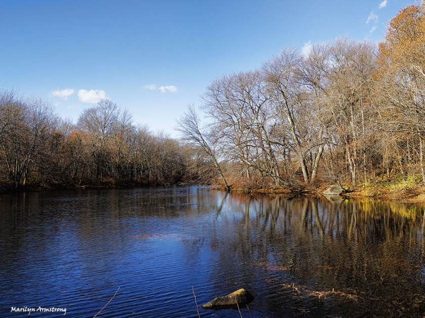 At River Bend along the Blackstone River, November 8th.