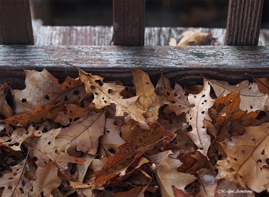 72-oak-leaves-deck-21112016_019