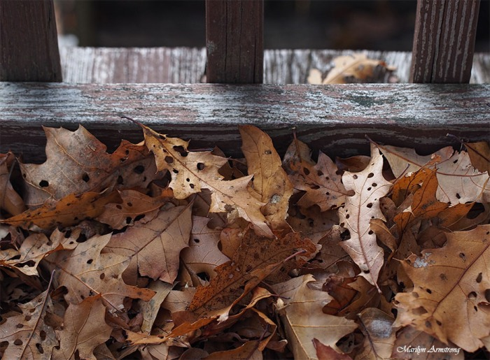The crunchy leaves of summer past.