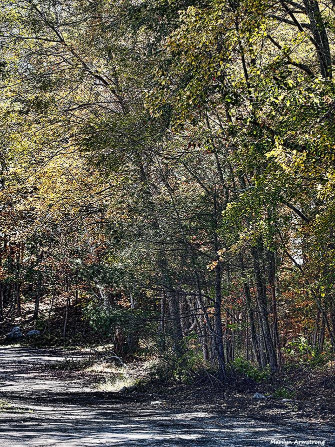 72-path-desaturated-foliage-ri-pl6-ma-10142016_054