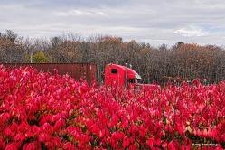 72-red-on-red-garry-november-03112016_017