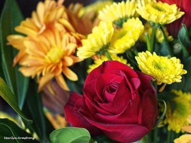 72-rose-bouquet-22112016_004