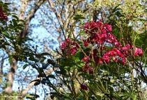 72-roses-november-02112016_025