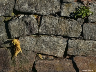 Texture of stone along the river