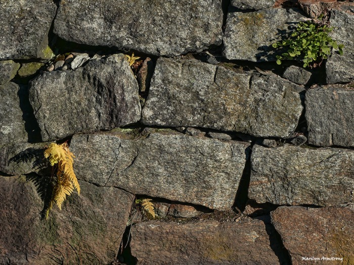 Stones along the canal and the little plants that grow in the wall.
