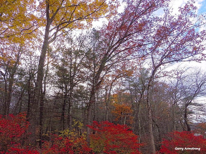Photo: Garry Armstrong - Late autumn, Connecticut