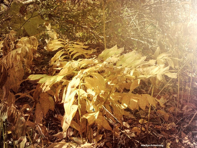 72-yellow-fronds-08112016_09