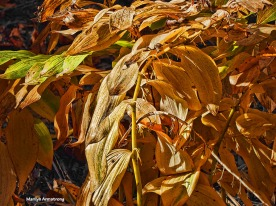 72-yellow-fronds-election-day-08112016_11