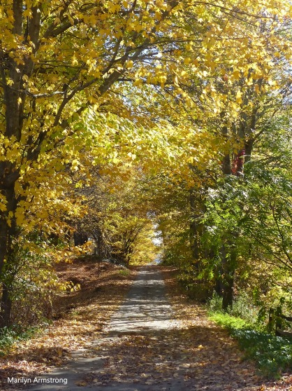 180-path-autumn-peacham-clean_081