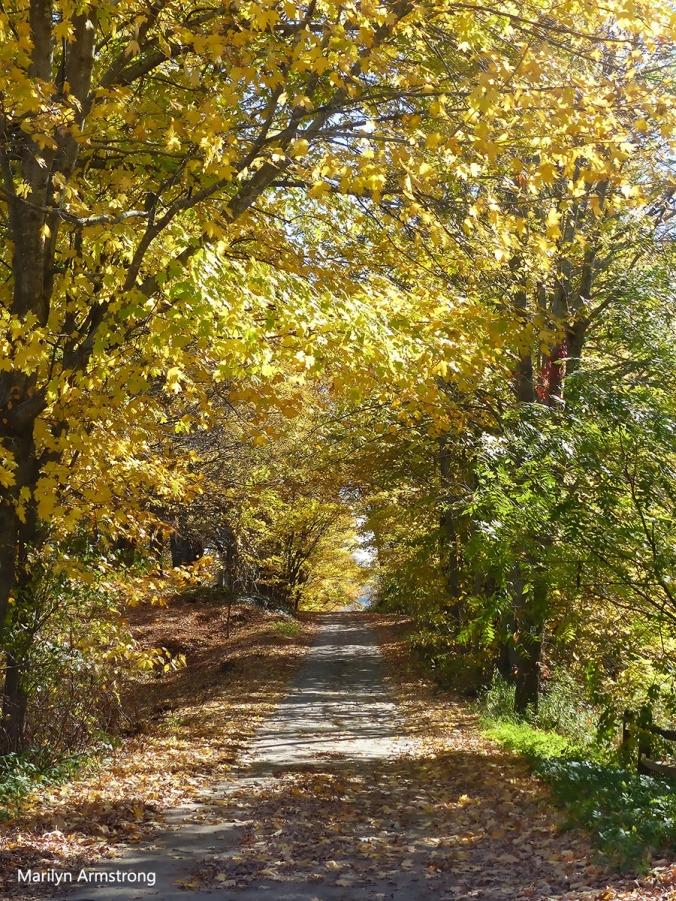 180-path-autumn-peacham-clean_081