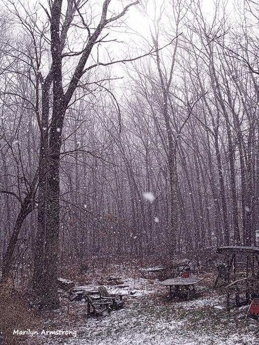 180-tall-woods-snow-flurries-30122016_03