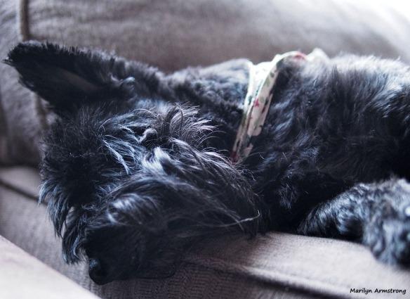 Bonnie sleeping off the big night