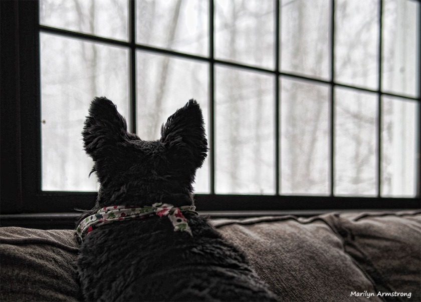 300-bonnie-snow-17122016_022