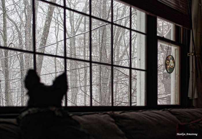 Bonnie watches the snow falling.