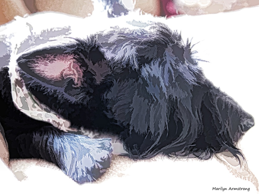 300-gibbs-sofa-dog-13122016_002