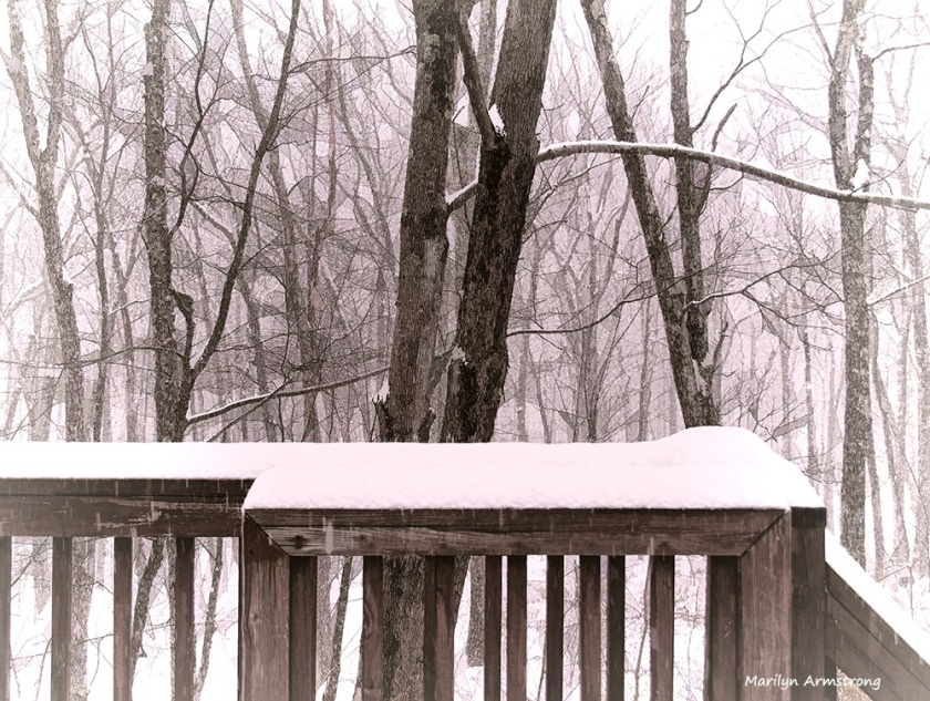 Snow in the woods in December