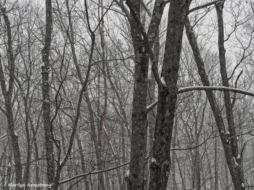 300-snowy-woods-17122016_001