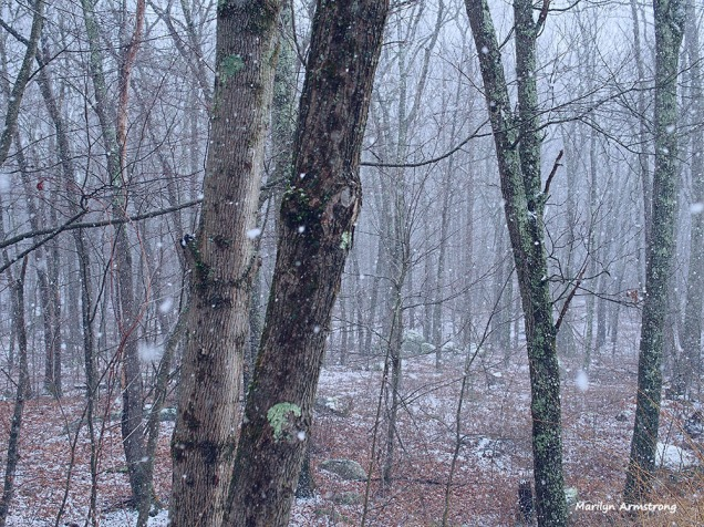 300-woods-snow-flurries-30122016_05