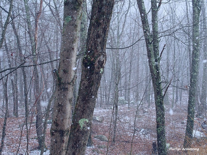 300-woods-snow-flurries-30122016_05