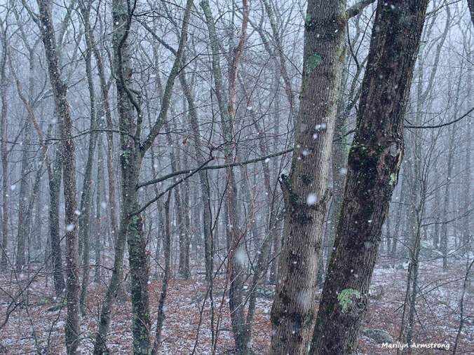 300-woods-snow-flurries-30122016_06