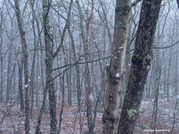 300-woods-snow-flurries-30122016_06