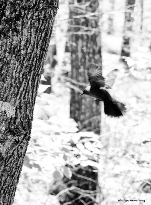 72-bw-bird-flying-062616_00