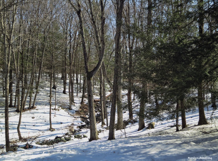 72-curley-snow-02252013_0069