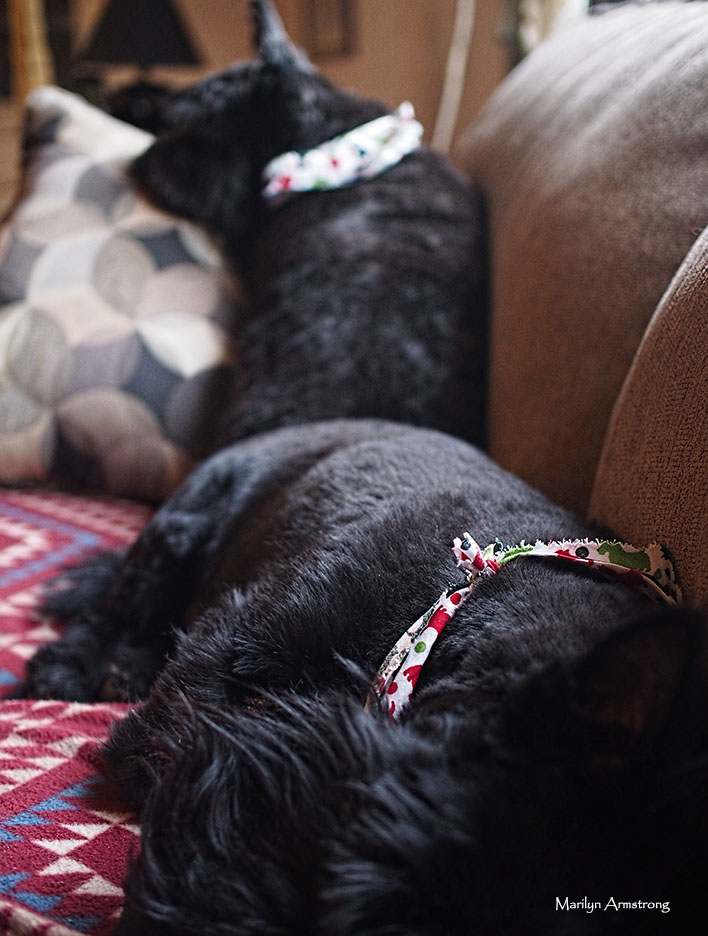 72-dog-grooming-day-08122016_12
