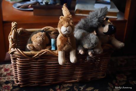72-dog-toys-basket-11122016_043