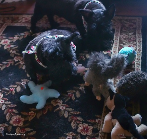 72-dogs-toys2-10122016_026