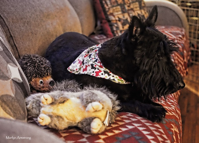 Gibbs, now with both hedgehog and squirrel