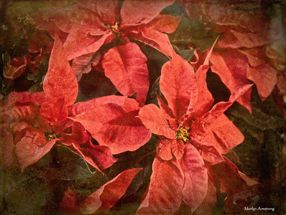 72-poinsettia-regan-party-06122016_05