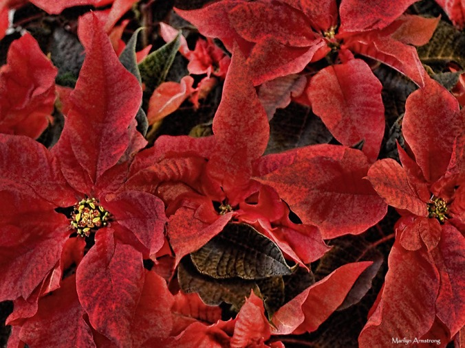 72-poinsettia-regan-party-06122016_06