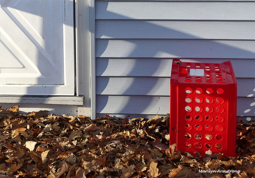 A red crate in a pile of oak leaves