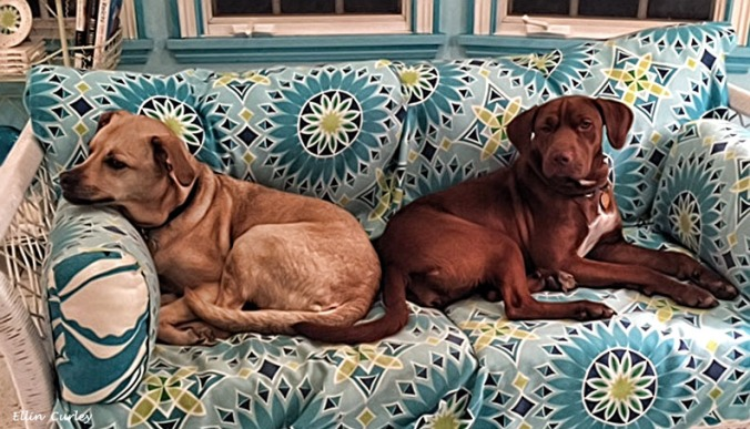 Remy & Lexi