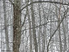 180-fz300-snowy-woods-penink-07012017_09