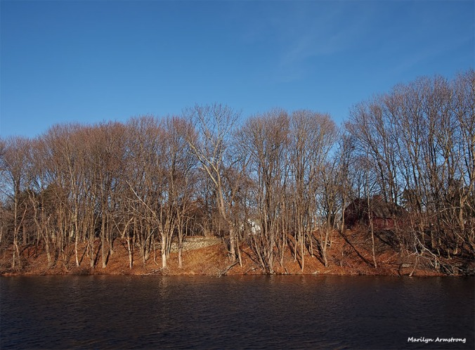 Late afternoon, Friday, January 13th on the shores of the Mumford River