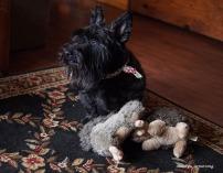 300-bonnie-toys-scotties-dont-share-interiors-02012017_025