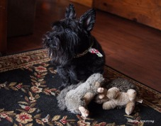 300-bonnie-toys-scotties-dont-share-interiors-02012017_025