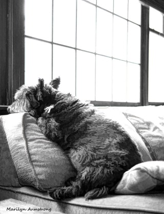 300-bw-bonnie-window-02012017_021