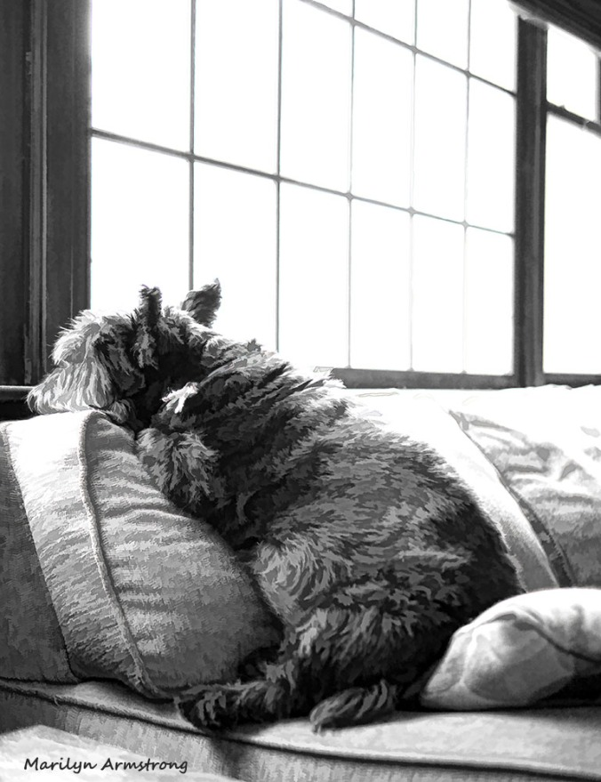 This is Bonnie's favorite daytime place. She can sleep, occasionally opening an eye to catch an overview of her domain.