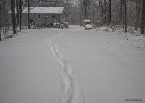 Photo: Garry Armstrong --Winter at home