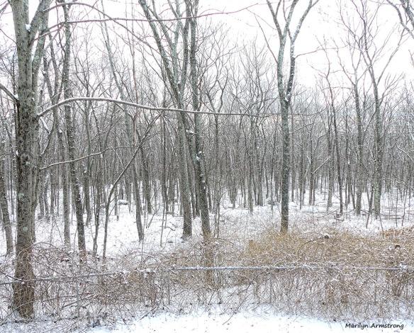 300-light-snow-falling-06012017_001
