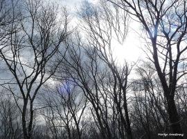 300-light-snow-overnight-06012017_011