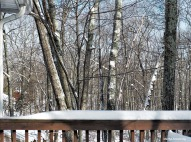 300-morning-after-snow-08012017_030
