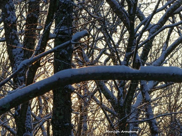 180-snow-dawn-020117_004