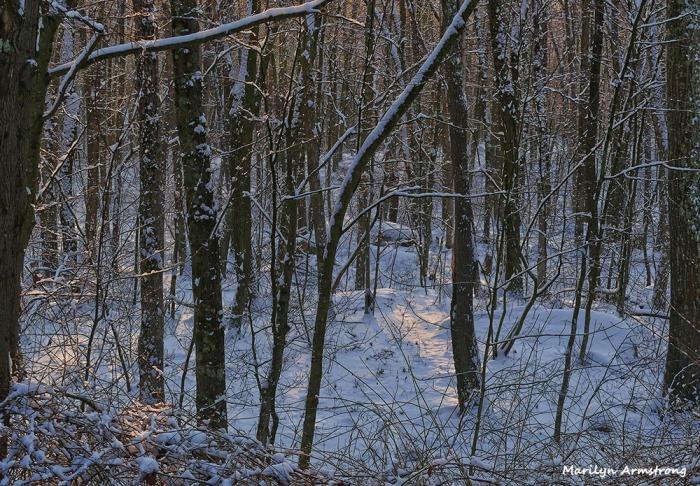 180-snow-dawn-020117_022