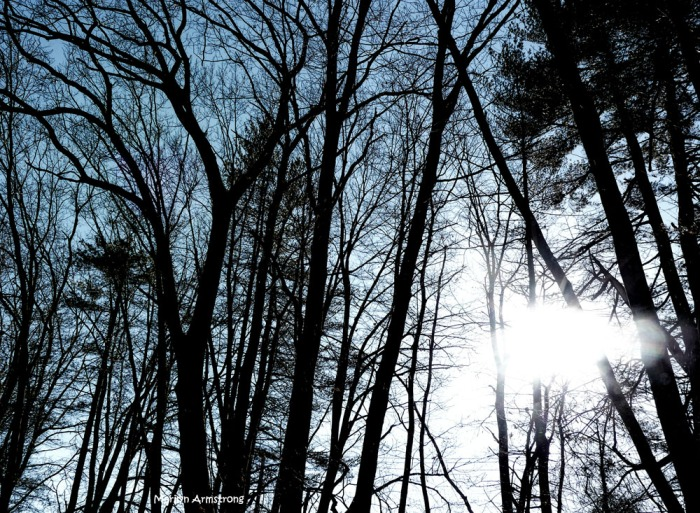 180-trees-sun-canal-ma-230217_005