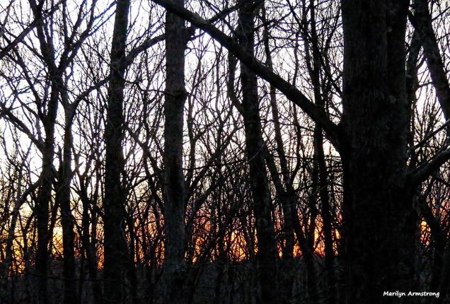 180-woods-dawn-01172017_03